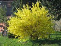 pflanzen015